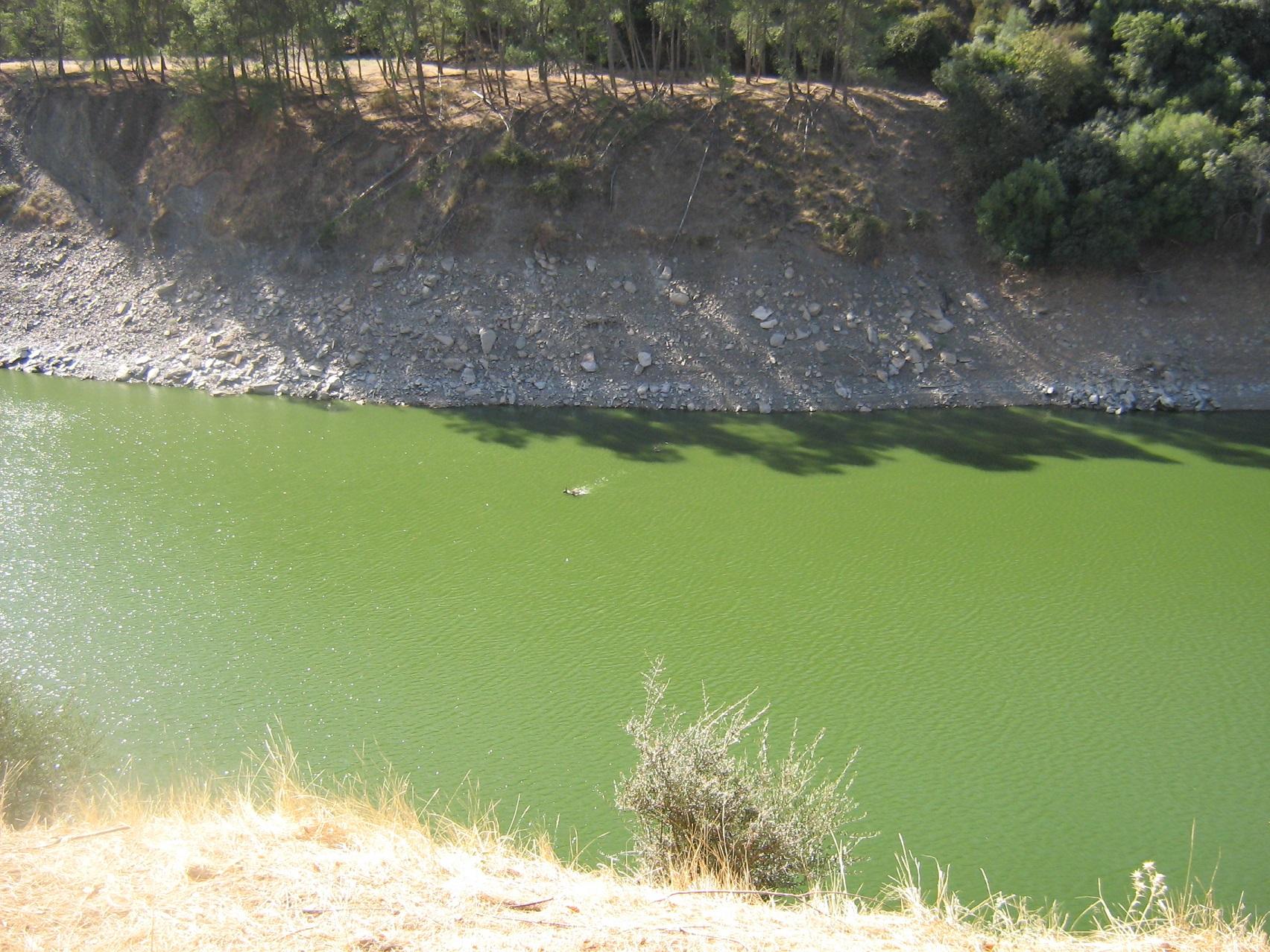 Ciervos nadando en el río, de lejos (voy cruzando el río parecen decir)