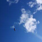 Cigüeña entre nubes