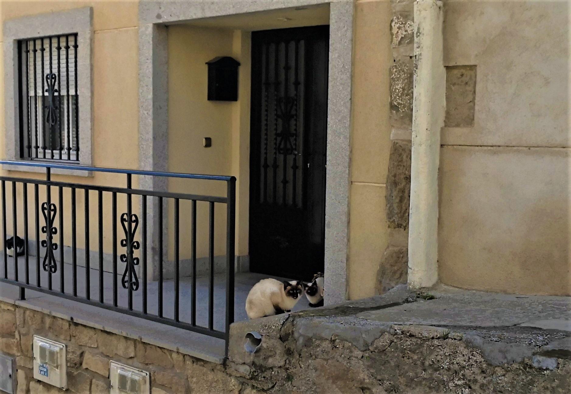 Gatos siameses en las calles de Ledesma